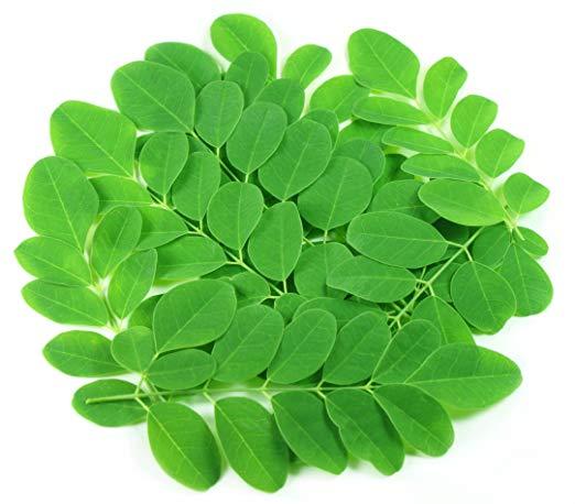 Moringa Leaf Manufacturer in Virudhunagar Tamil Nadu India by KPM EXIM | ID  - 4995434