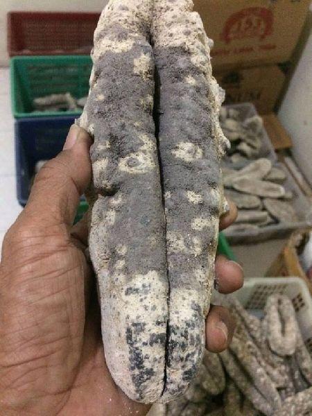 Dried sea cucumber (bat susu, white teatfish)
