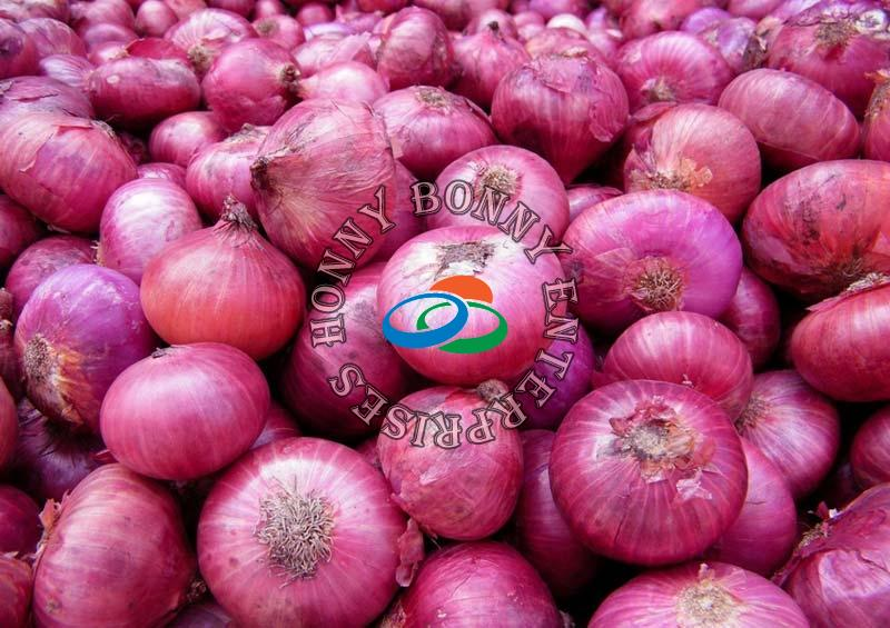 Red Onion (HBEONION)