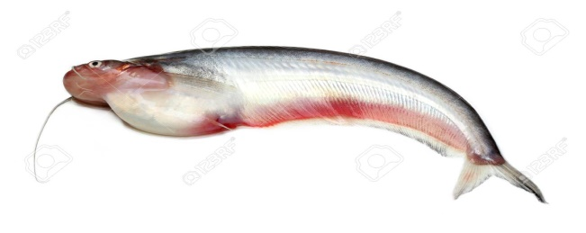 Frozen Pabda Fish