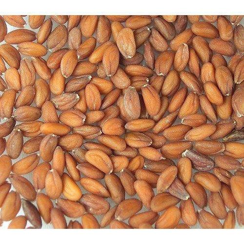 Garden Cress Seed Lepidium Sativum Exporters In Karaikudi Tamil