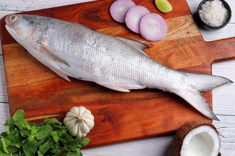 Fresh Indian Salmon Fish