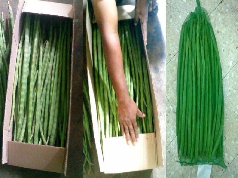 Fresh Drumsticks (0709)