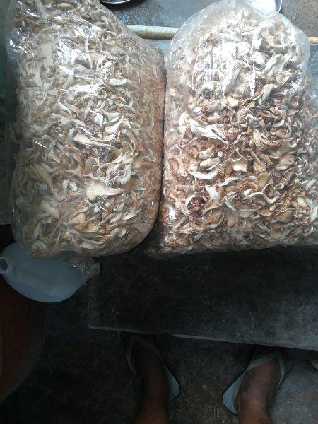 Oyster Dried Mushroom