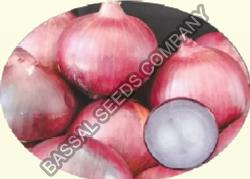 Pusa Ridhi Onion Seeds