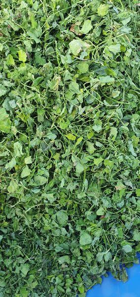 Dried Kasuri Methi Leaves (0910)