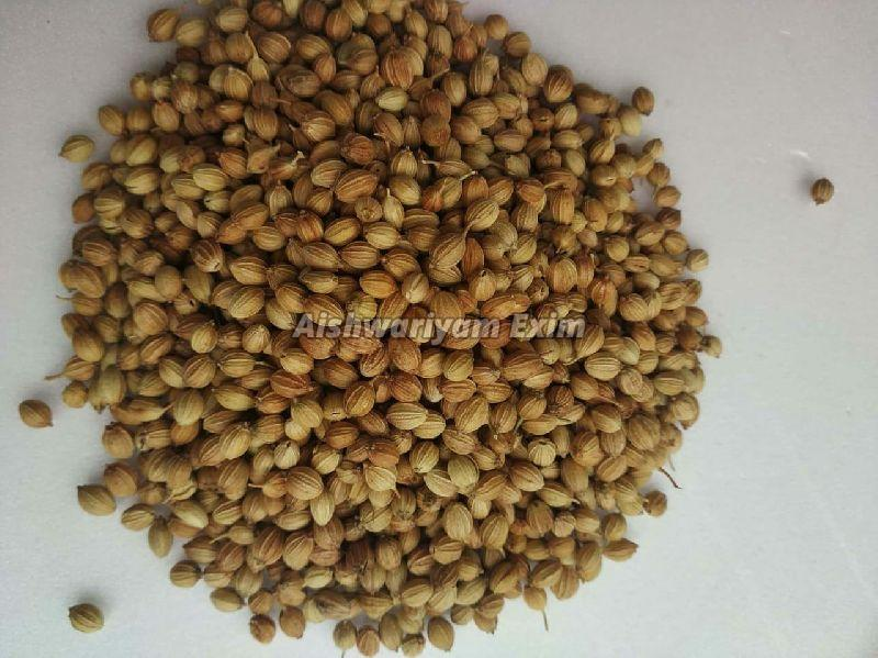 Coriander Seeds (AIEX - Coriander seed)