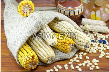 White Maize Seeds