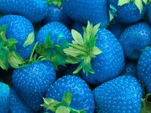 Patent Blue V Food Colour Manufacturer in Ahmedabad Gujarat ...
