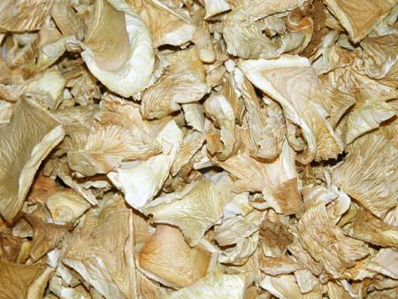 Dried Oyster Mushroom Exporters in Solapur Maharashtra India