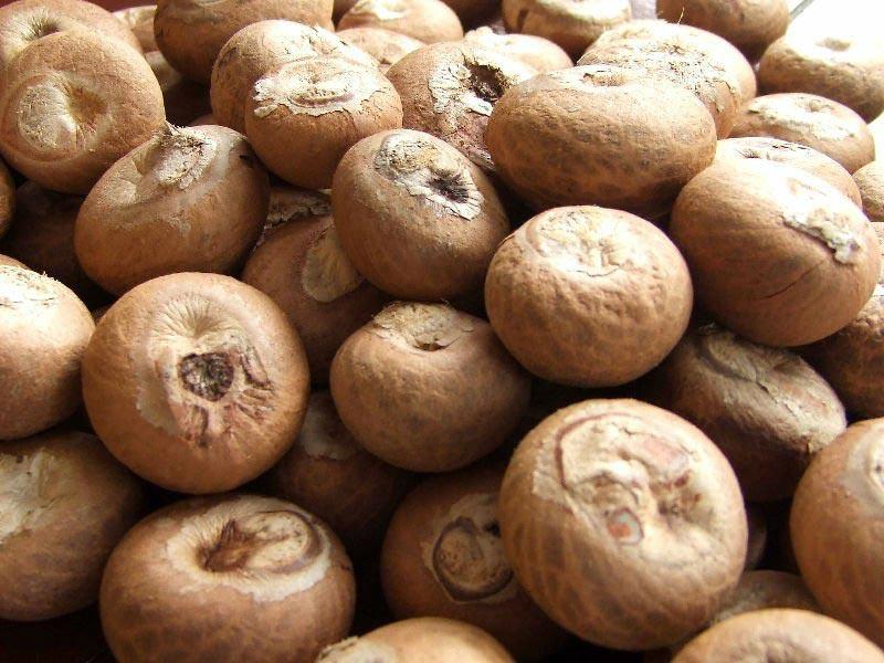 Areca Nuts (6655)