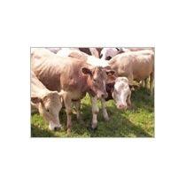 Talc Powder For Animal Feed