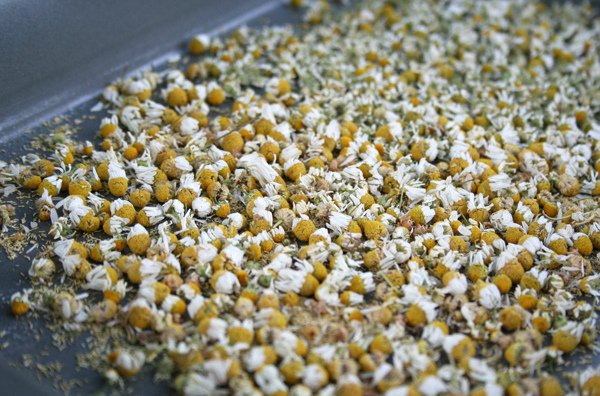 Chamomile Dry Flowers