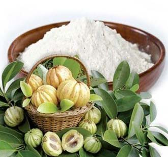 Garcinia Cambogia Extract Manufacturer In Maharashtra India By