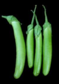 Hybrid Cabbage Titan F1