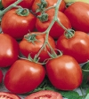 Hybrid F1 Tomato Deepam