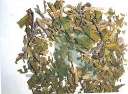 Adhatoda Vasica (Vasaka Leaves)