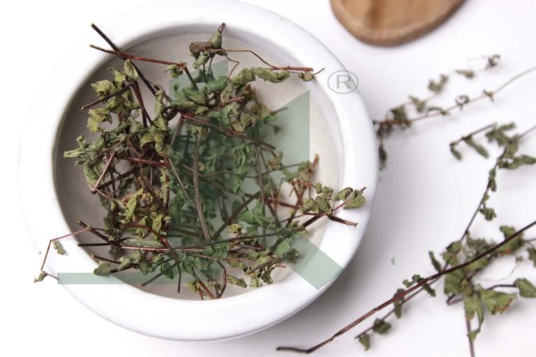 ADIANTUM VENERIS (capillary herb)