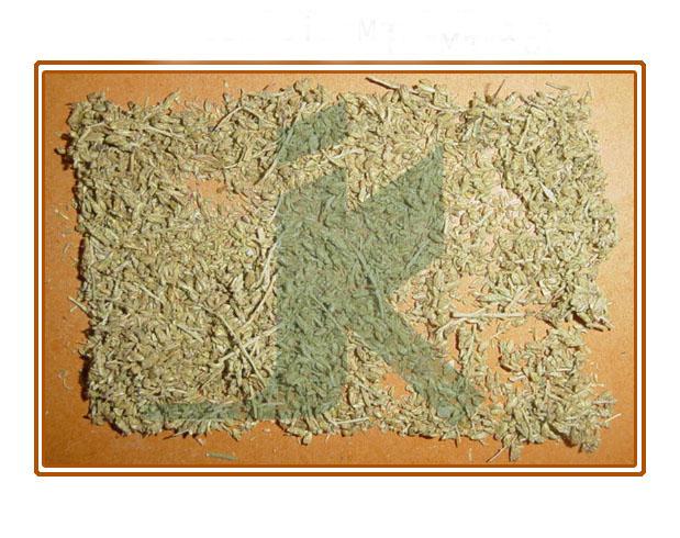 ARTEMISIA MARITIMA (worm seeds)