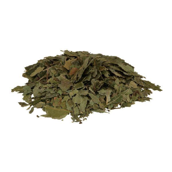 AZADIRACHTA INDICA (neem leaves)