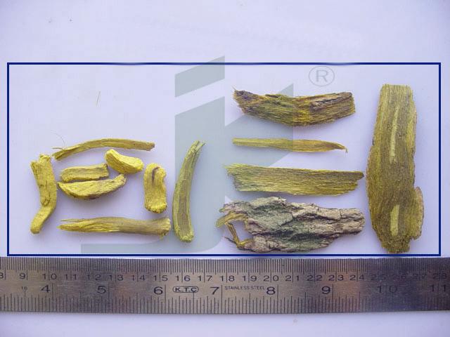 BERBERIS ARISTATA (barberry root)