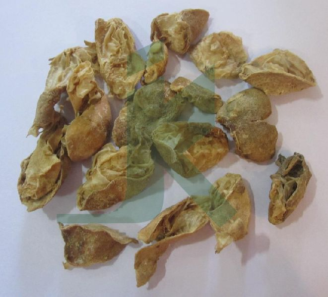 CITRUS LIMONUM (Lemon Peel)