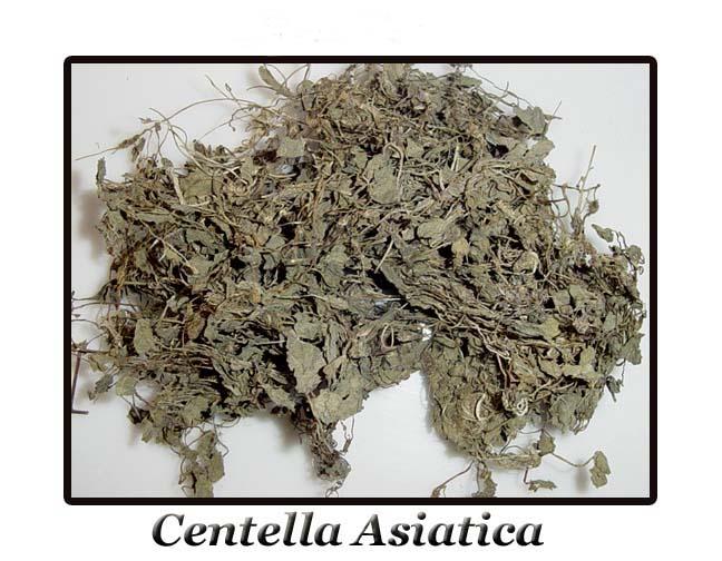 GOTU KOLA Centella Asiatica