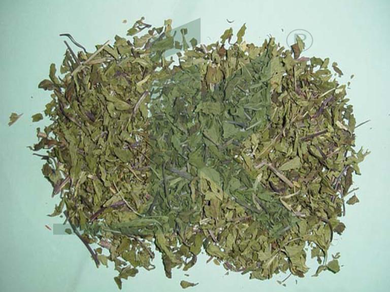 MENTHA ARVENSIS (Peppermint Leaf)
