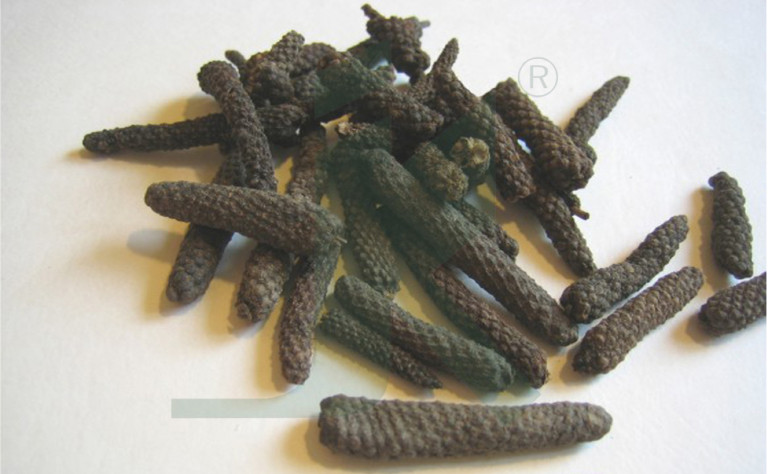 PIPER LONGUM EXTRACT (Indian Long Pepper, Pippali extract)