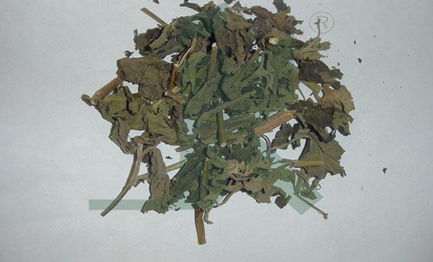 POGOSTEMON PATCHOULI (patchouli leaves)