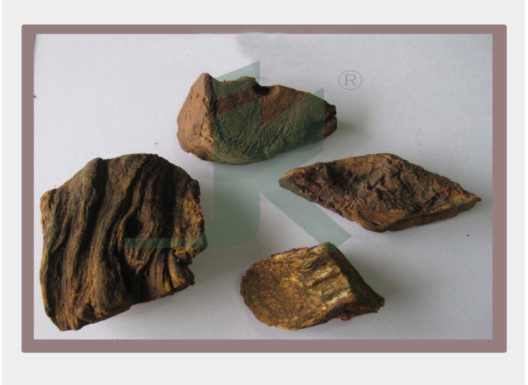 RHEUM EMODI EXTRACT (Indian Rhubarb Extract)