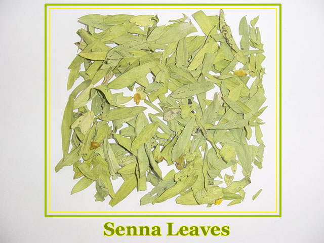 SEENA LEAVES Cassia Angustifolia