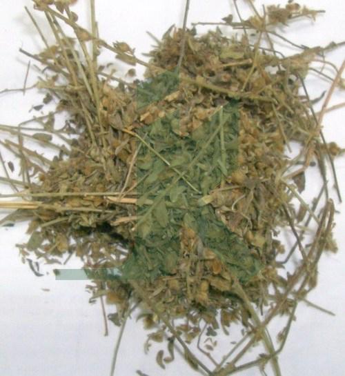 SOLANUM XANTHOCARPUM EXTRACT (Kantakari extract)