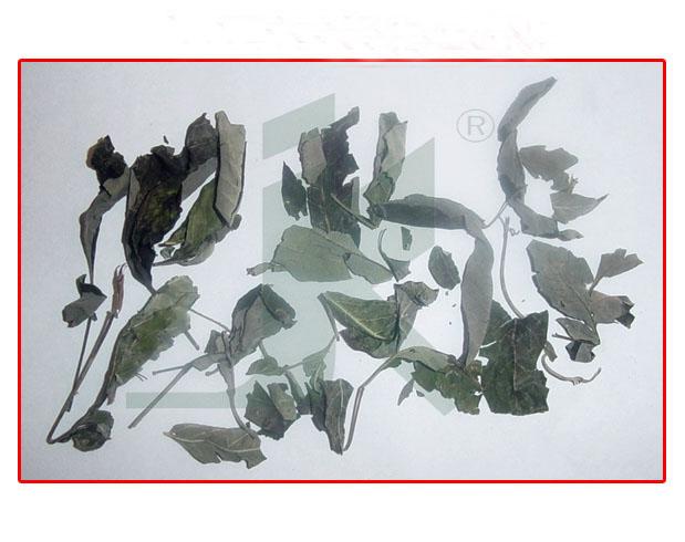 VITEX NEGUNDO LEAVES (vitex negundo leaves)