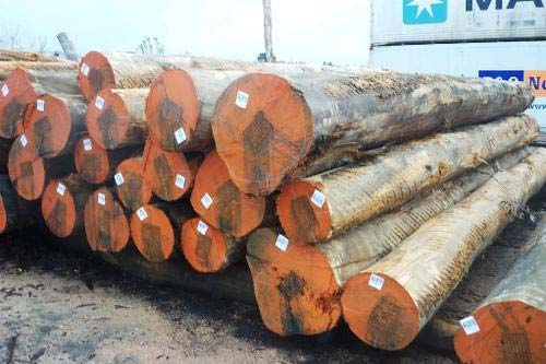 Teak round logs manufacturer in south west province
