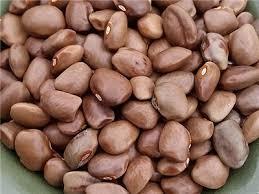 Green Lentil Bean Seeds For Planting