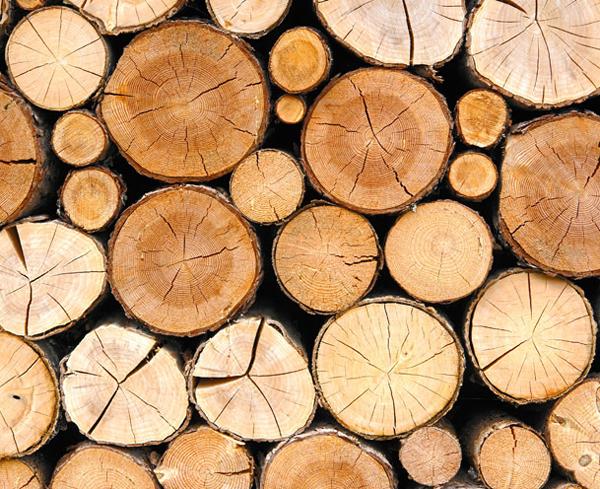 Timber Manufacturer Maharashtra India Pragati Laminate