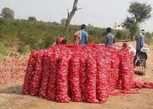 Farm Mesh Packed Onion
