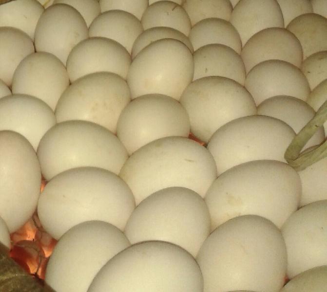 Bakery Duck Eggs