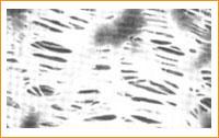PTFE Membrane Disc Filters