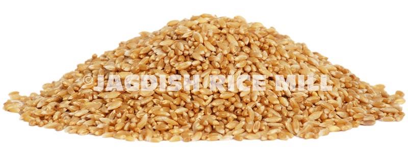 Buy Indian Wheat from Jagdish Rice Mill, Khambhat, India