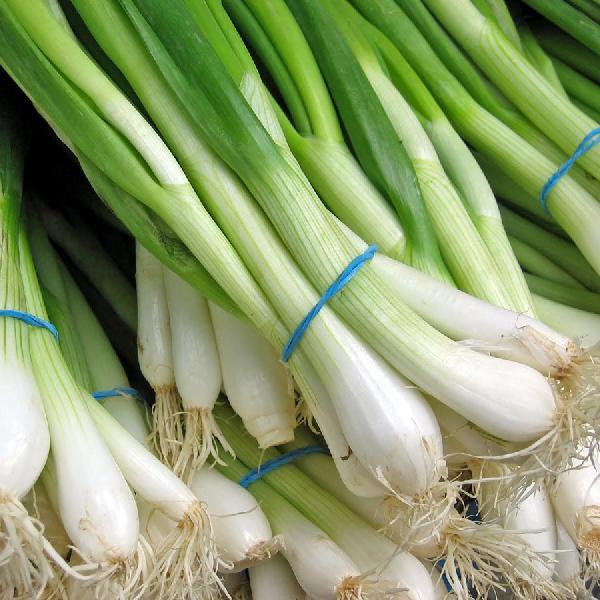 Spring Onion (097)