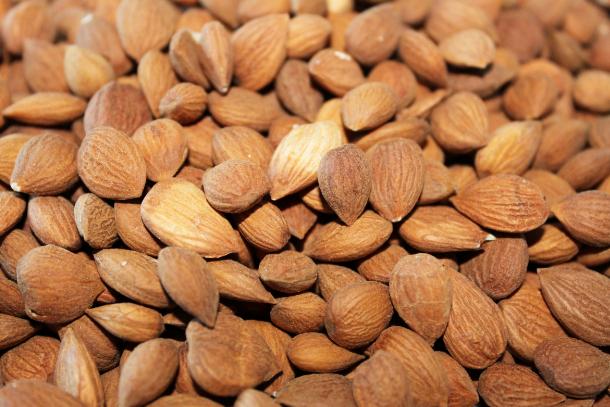 Bitter Kola Nuts Manufacturer in Carnarvon South Africa by
