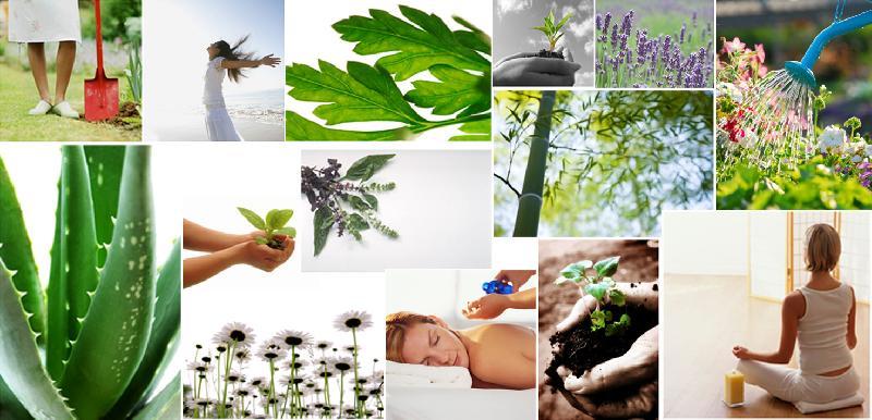 recipe: organic herbal extracts [9]