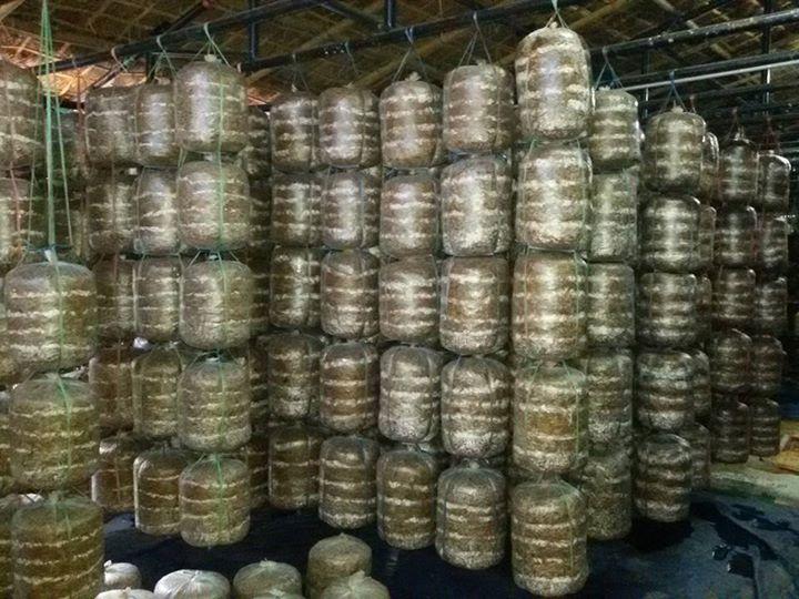 Services - mushroom farming services from Nagpur Maharashtra