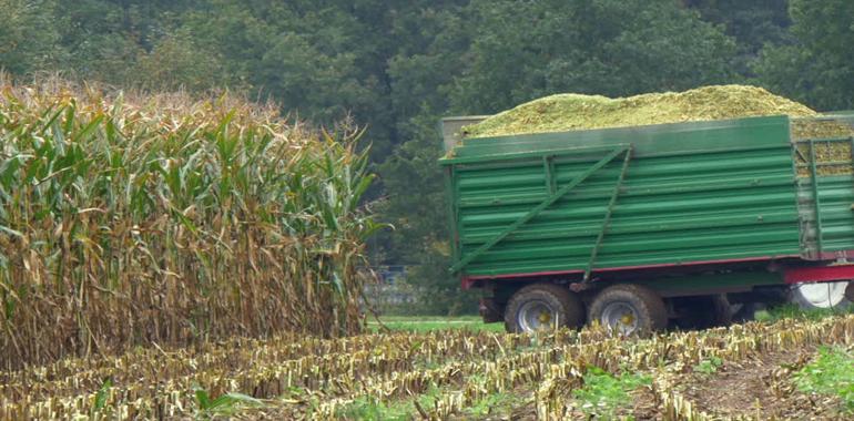 maize fotri