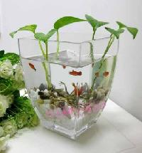Glass flower pot Manufacturer in Agra Uttar Pradesh India ...