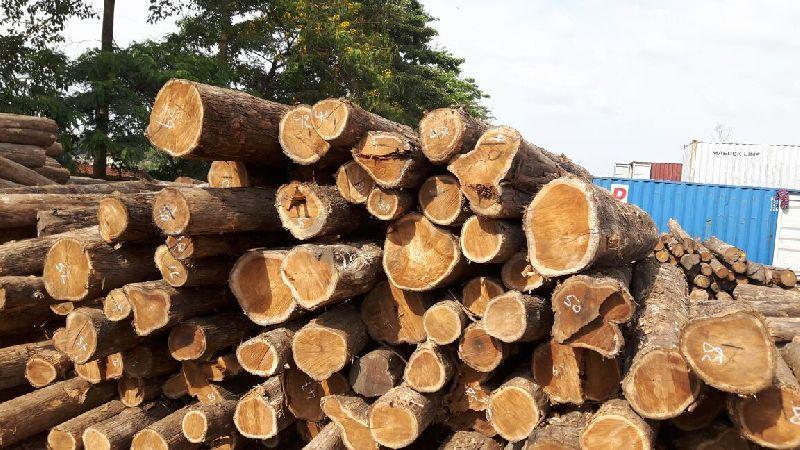 Brazilian Teak Wood Round Logs Exporters in Nagpur Maharashtra India by Bhagyalaxmi Enterprises