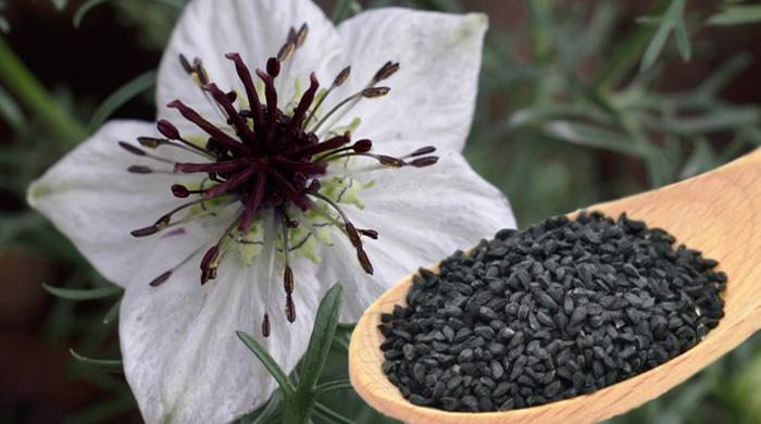 Nigella Sativa Seeds Manufacturer in Neemuch Madhya Pradesh India by Anil Kumar And Sanjay Kumar Jain | ID - 3297803