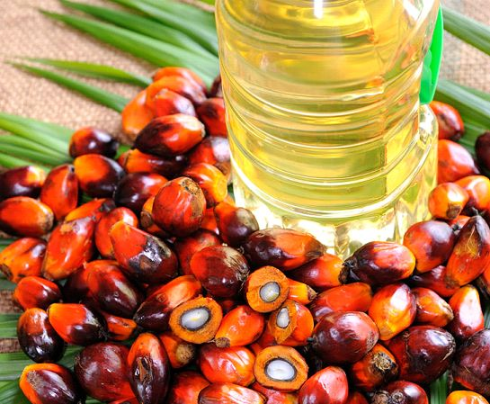Palm Oil and Olein